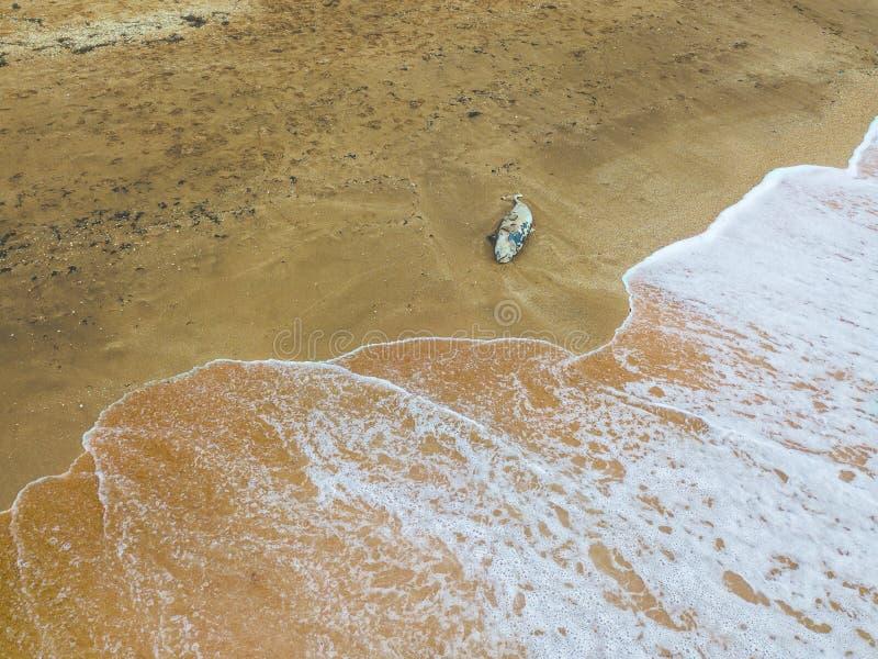Nieżywy delfin morzem zdjęcia royalty free