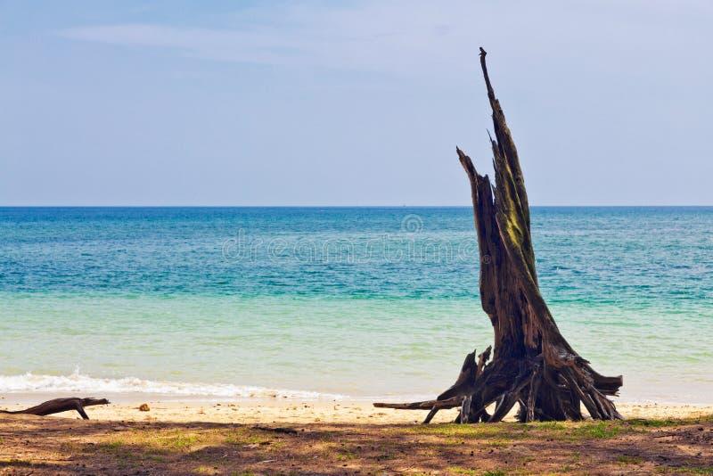 Nieżywy drzewny bagażnik na plaży zdjęcia royalty free