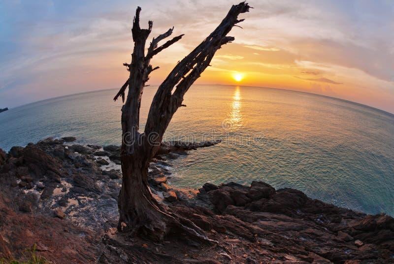 Nieżywy drzewny bagażnik na skałach zdjęcie stock