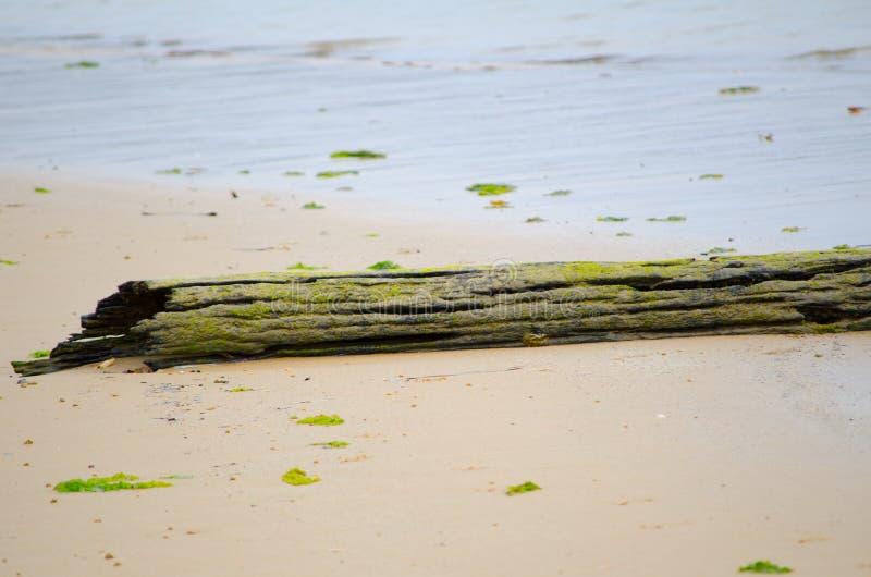 Nieżywy drzewny bagażnik zakrywający z mech na plaży zdjęcie royalty free
