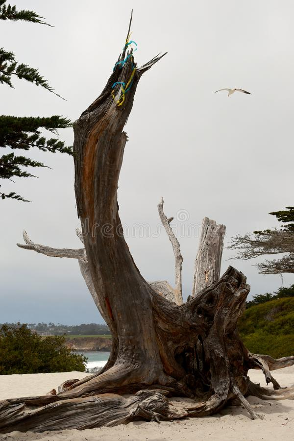 Nieżywy drzewo zdjęcia stock