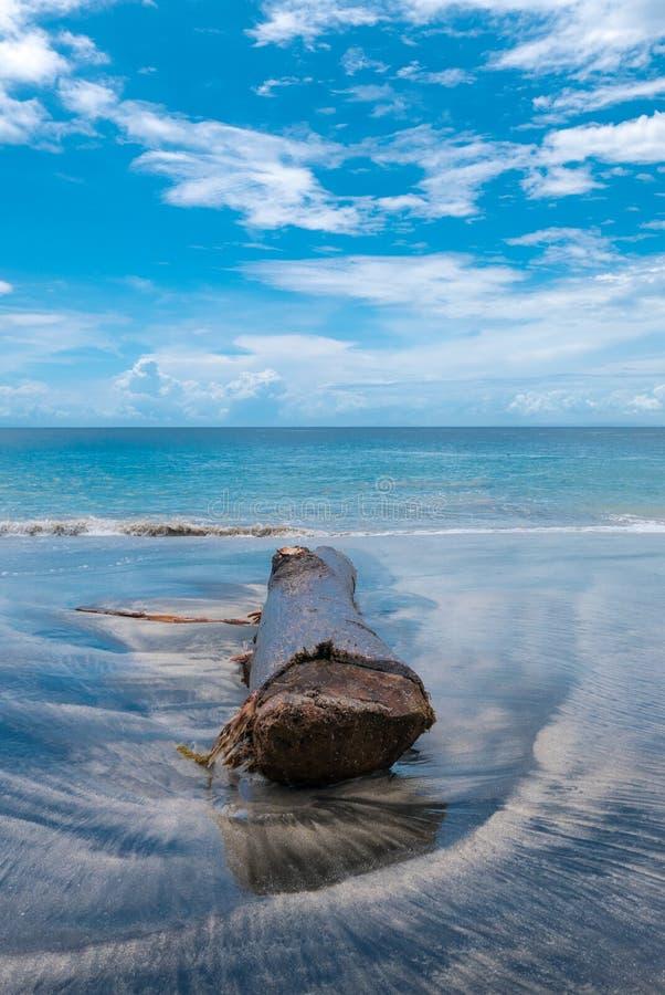 Nieżywy drzewo, bagażnik na plaży w Candidasa/ Bali wyspa fotografia stock