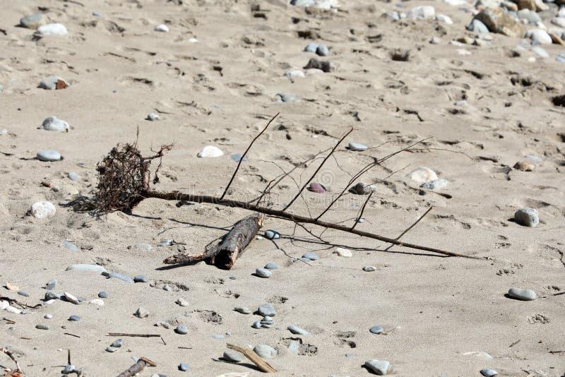 Nieżywy drzewo I Suszy gałąź na plaży zdjęcia royalty free