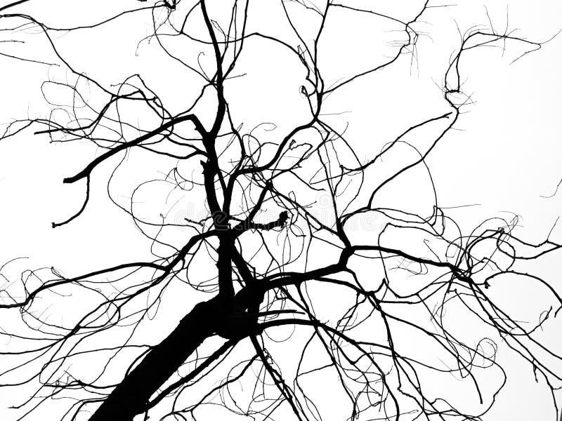 Nieżywy drzewo na białym tle zdjęcia royalty free
