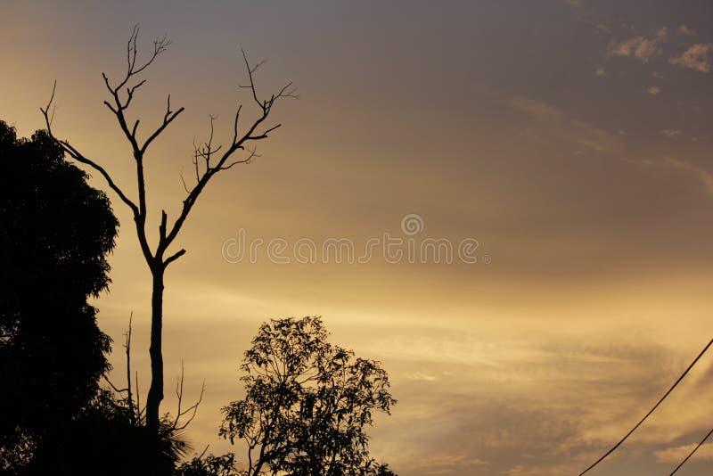 Nieżywy drzewo na wieczór zdjęcie stock