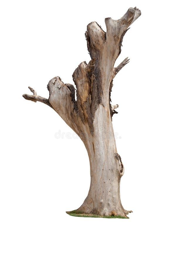 Nieżywy drzewo odizolowywający fotografia stock