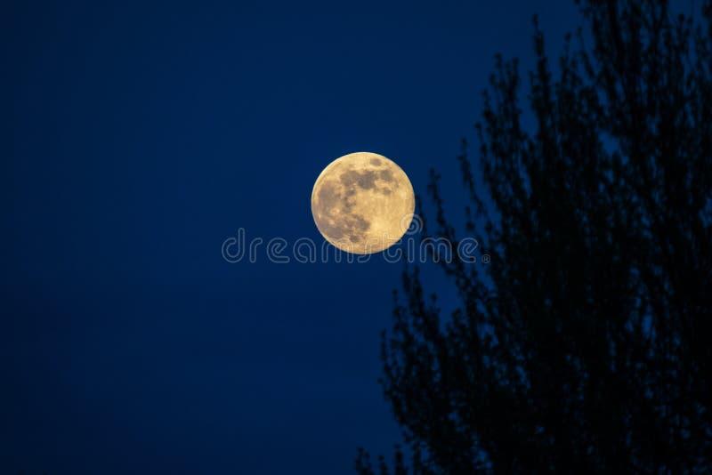 Nieżywy drzewo przy północą z rozjarzonym księżyc w pełni zdjęcia stock