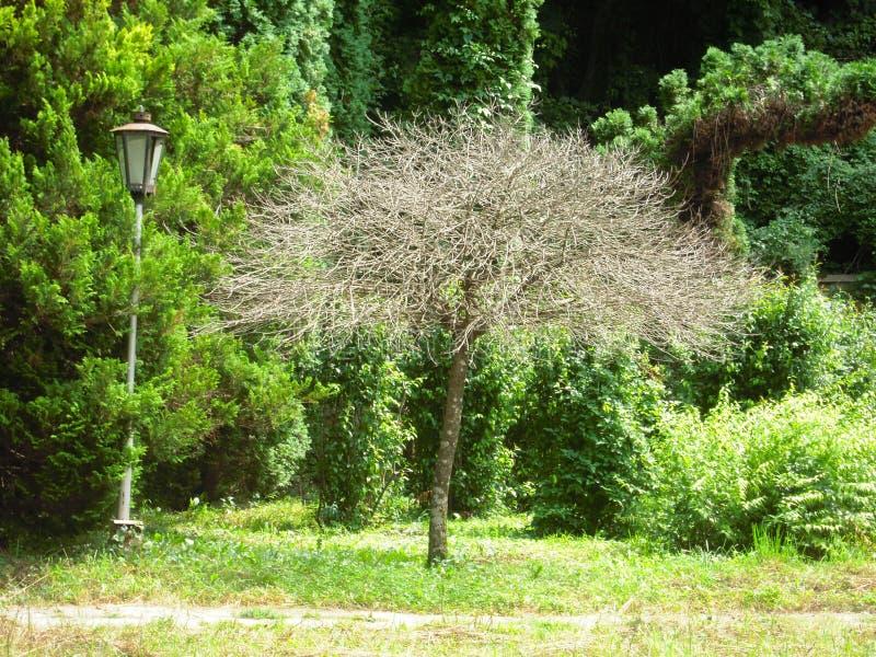 Nieżywy drzewo wśród utrzymania obraz royalty free