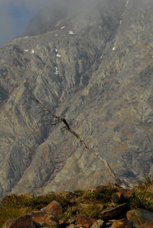 Nieżywy drzewo w Val Grande przed Pietra Rossa górami fotografia royalty free