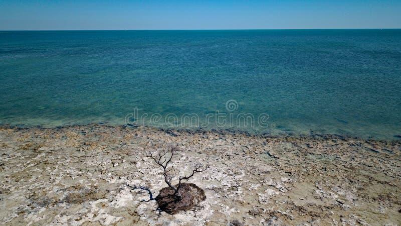 Nieżywy drzewo wewnątrz oceanem zdjęcia stock