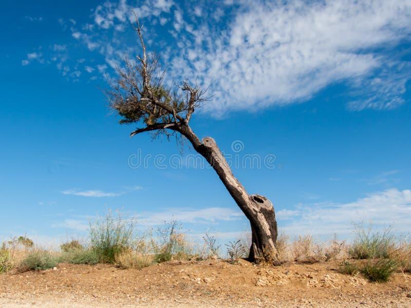 Nieżywy i nagi drzewo obrazy stock
