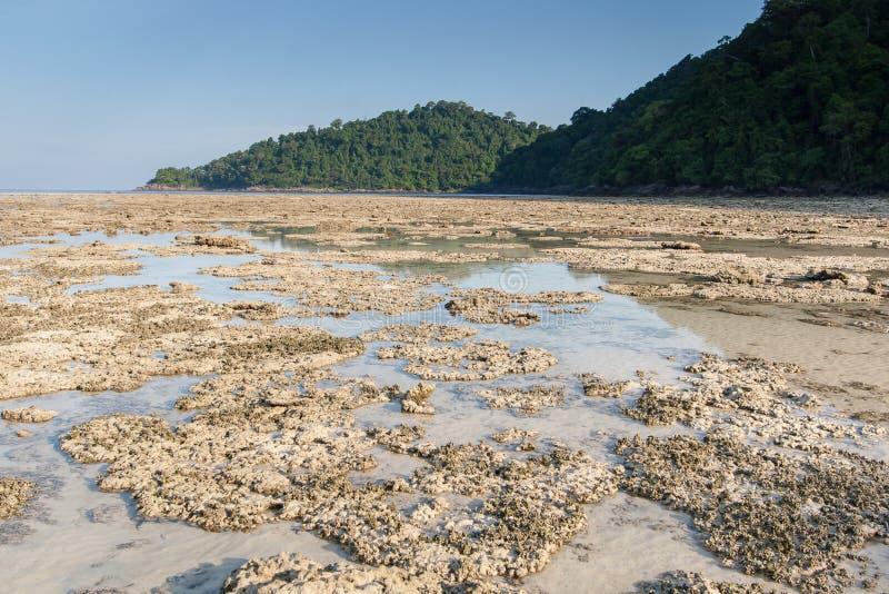 Nieżywy korala pole obraz royalty free