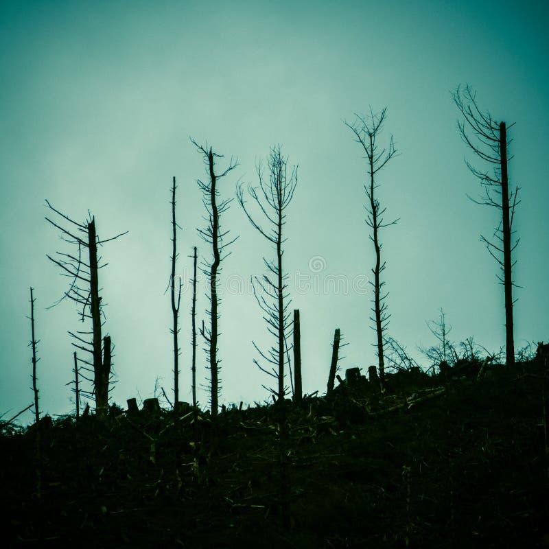 Nieżywy las Po ogienia zdjęcia stock