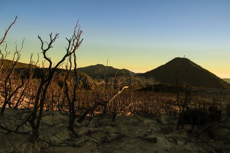 Nieżywy las przy górą Papandayan zdjęcia stock