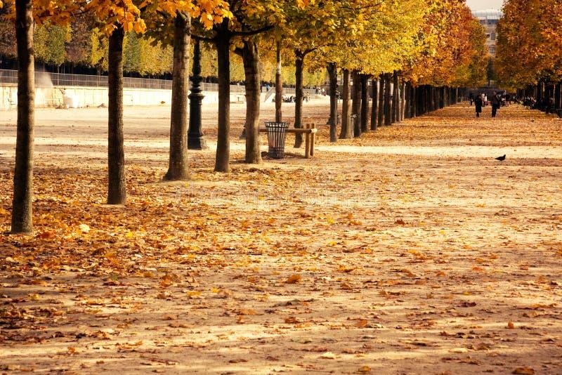 nieżywy liść Paris czas obraz royalty free