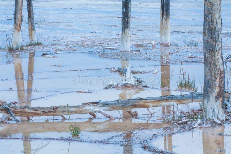 Nieżywy Lodgepole sosen krajobraz obrazy stock