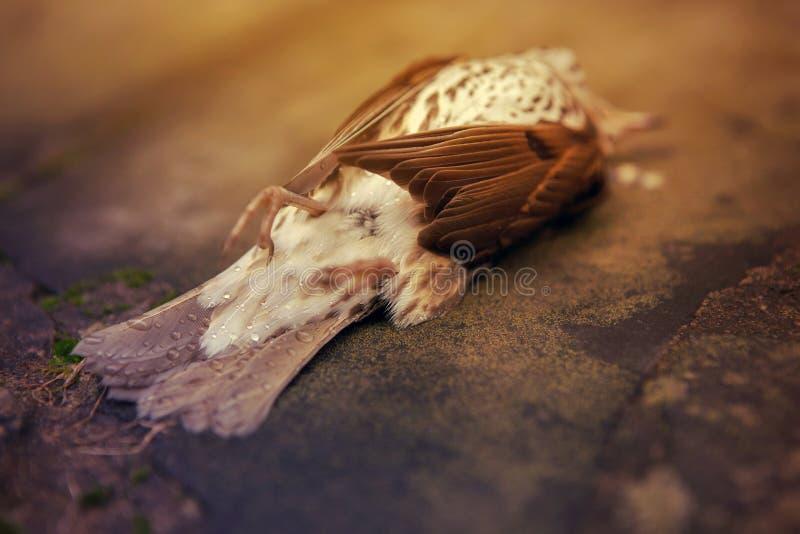 Nieżywy ptak, śmiertelny pojęcie obrazy royalty free
