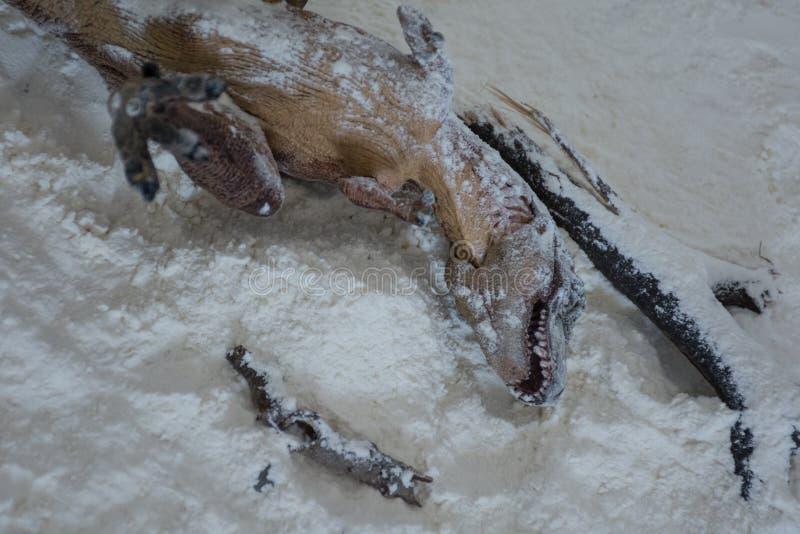Nieżywy tyrannosaurus rex w śnieg podczas wygaśnięcie ery obraz royalty free