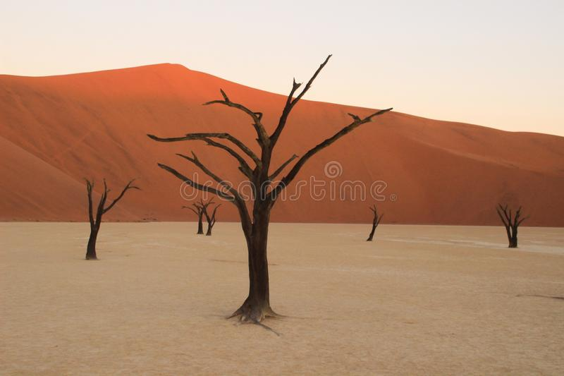 Nieżywy Vlei w południowej części Namib pustynia w Namib-Nacluft parku narodowym w Namibia, zdjęcie stock