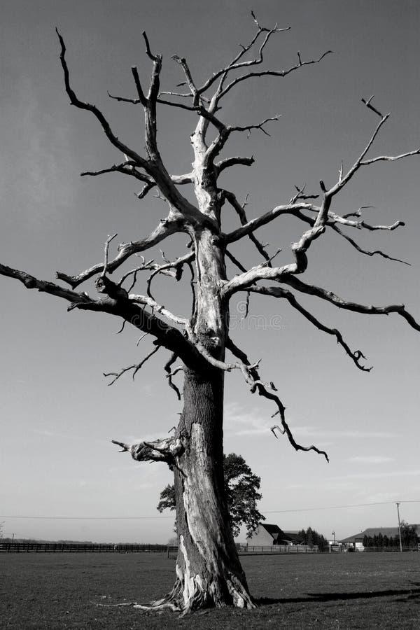 nie żyje greyscale drzewo zdjęcie royalty free