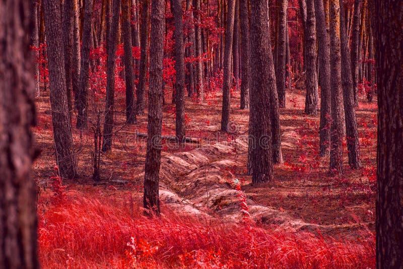 Nie głęboki przykop w jaskrawym czerwonym lesie z czerwonymi liśćmi fotografia royalty free