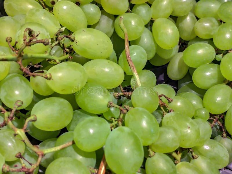 Nie wszystkie winograd niedźwiadkowa owoc dla vinification: nawet stołowi winogrona są bardzo popularni Jeden winogrono prowadzi  obraz stock