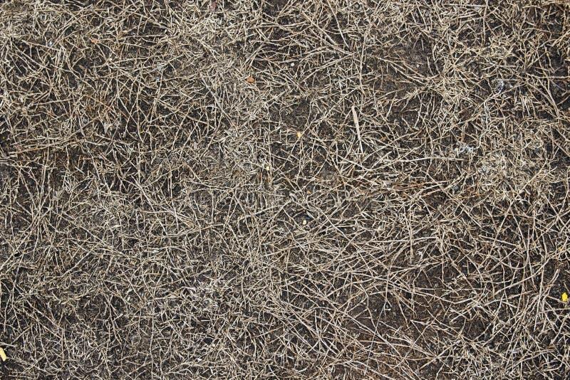 Download Nieżywa trawa zdjęcie stock. Obraz złożonej z tło, fabryka - 57674222