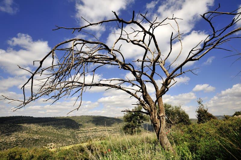 Download Nieżywy Drzewo Na Nieba Tle Zdjęcie Stock - Obraz złożonej z góry, greenbacks: 57663590