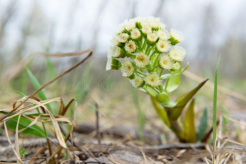 Nie zwyczajny kwiat zasadza Zsolt piękno natura obrazy royalty free