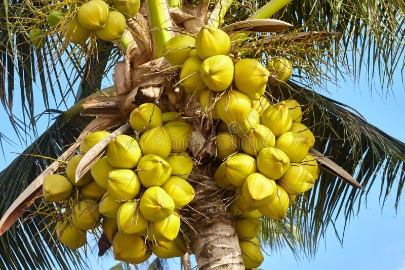nieba błękitny kokosowy drzewo zdjęcie royalty free