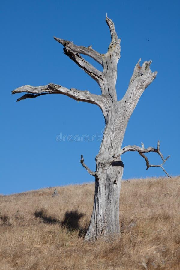 nieba błękitny nieżywy drzewo zdjęcia stock