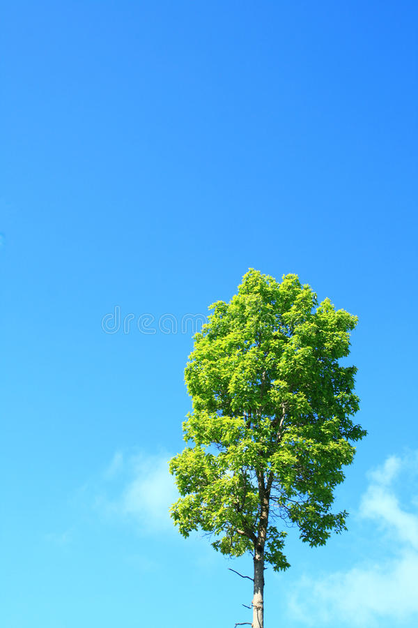 nieba drzewo obraz royalty free