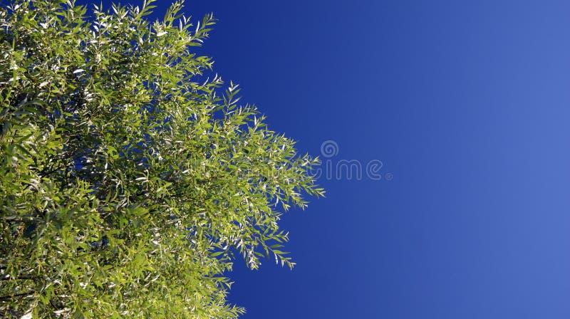 Nieba drzewo zdjęcia royalty free