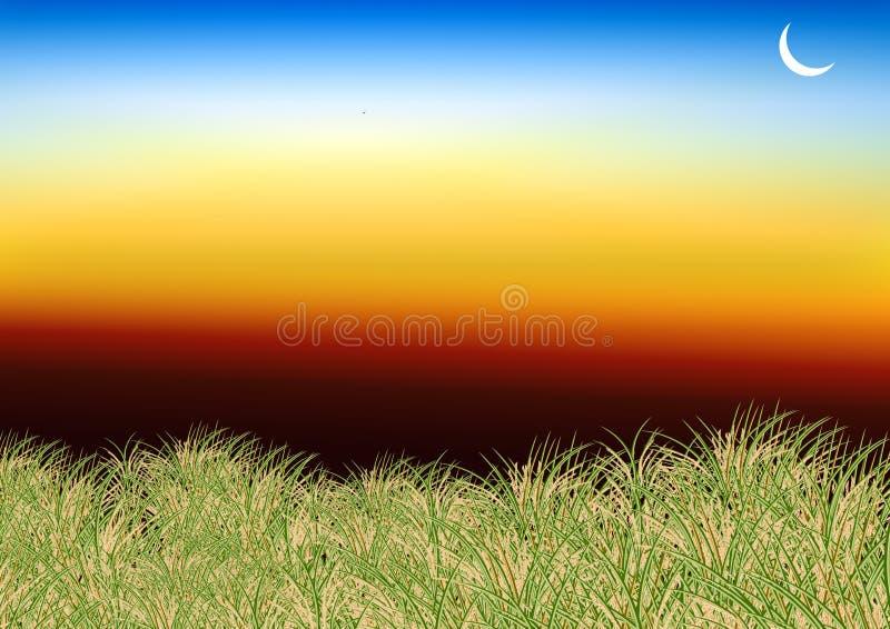 Nieba i ryż pole obraz stock