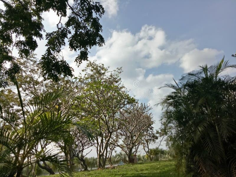 Nieba odczucia drzewny życie relaksuje zdjęcia stock