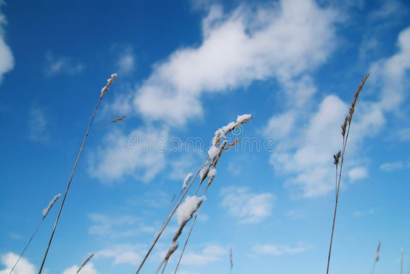 nieba roślin objętych śnieg obraz stock
