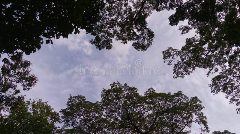 Nieba ` s rama zdjęcia royalty free