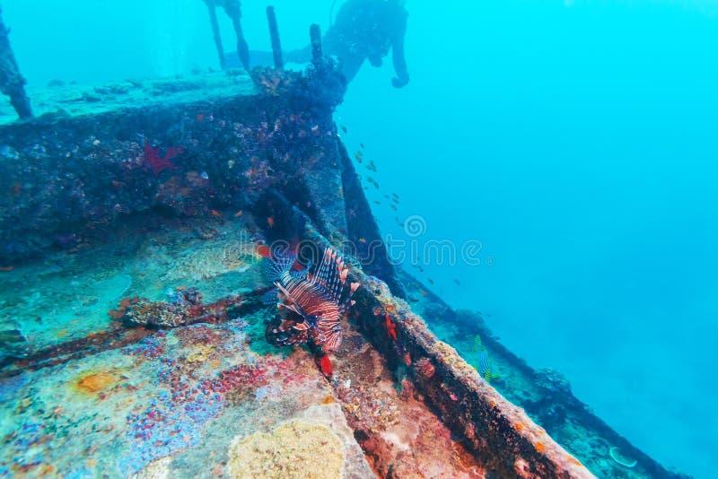 Niebezpieczna lew ryba blisko Shipwreck zdjęcie royalty free