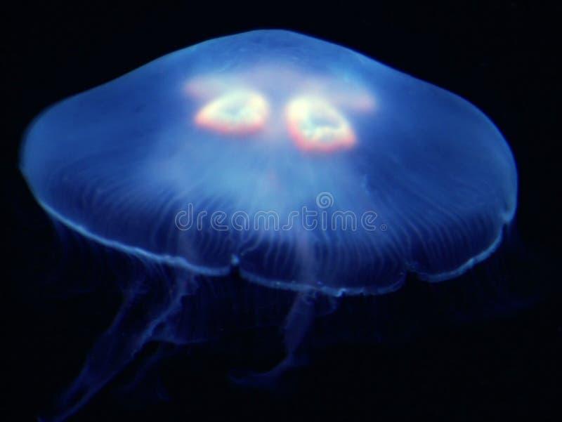 niebieska galaretka zdjęcia stock