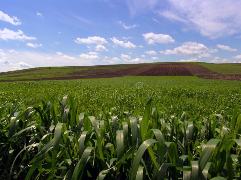 Download Niebieska green zdjęcie stock. Obraz złożonej z wieś, fielder - 127278
