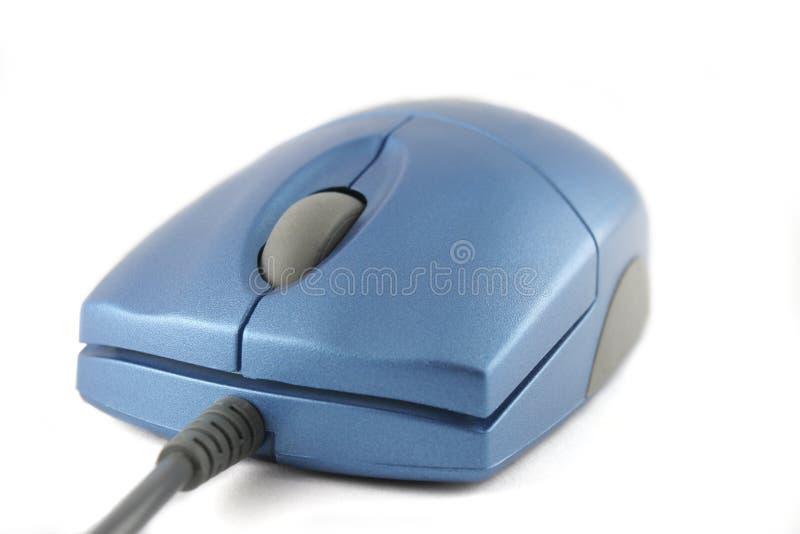 niebieska mysz white obrazy stock