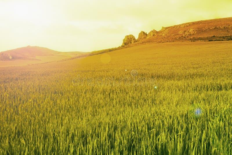 niebieska spowodowana pola pełne się chmura dzień zielonych roślin krajobrazu ruchu pokaz mały nie niebo było pszenicznym biały w obraz stock