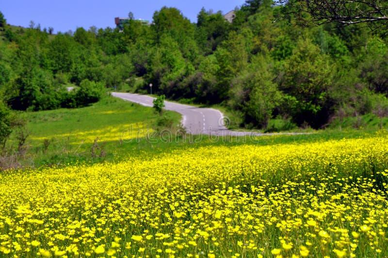 niebieska spowodowana pola pełne się chmura dzień zielonych roślin krajobrazu ruchu pokaz mały nie niebo było pszenicznym biały w zdjęcia royalty free