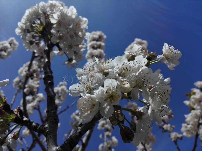 niebieska wiosna fotografia royalty free