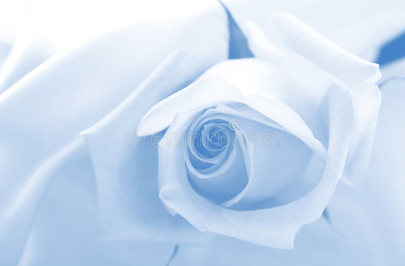 niebieski delikatny fotografia royalty free