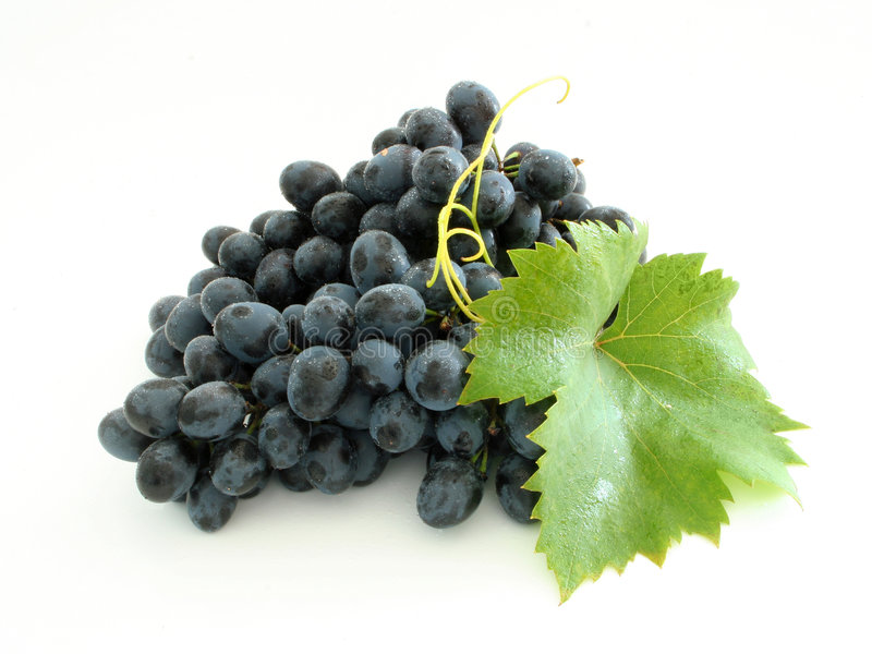 niebieski klastry winogron zdjęcia royalty free