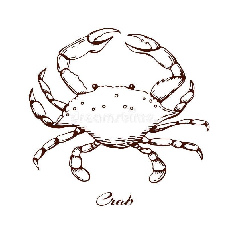 niebieski krabie Owoce morza projekta element denny zwierzę z pazurami grawerujący rocznika krab kontur ilustracja, ręka rysująca ilustracji