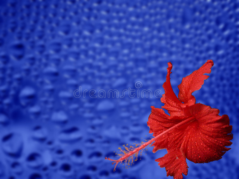niebieski kwiat czerwonej fotografia stock