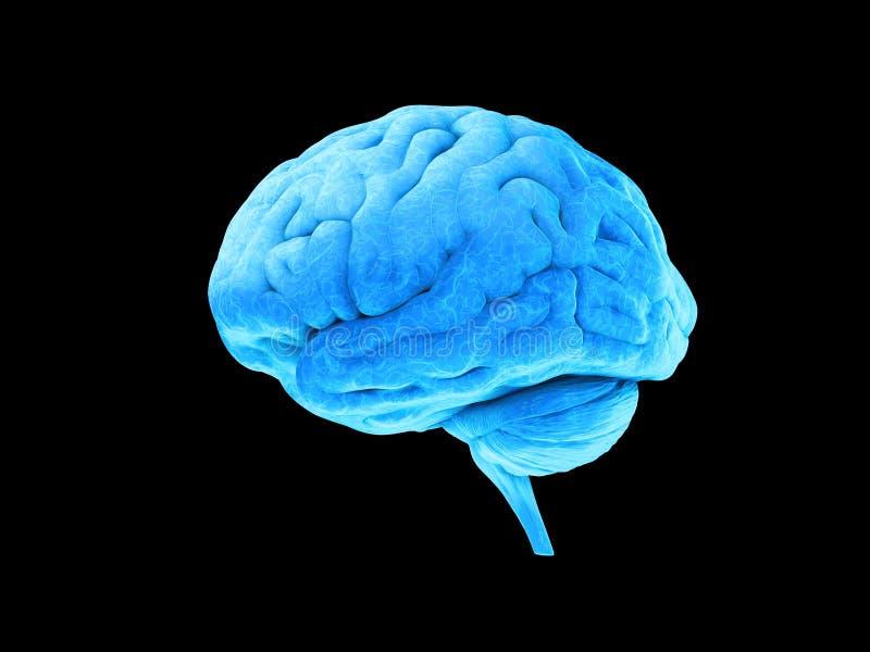 niebieski mózgu zdjęcia stock
