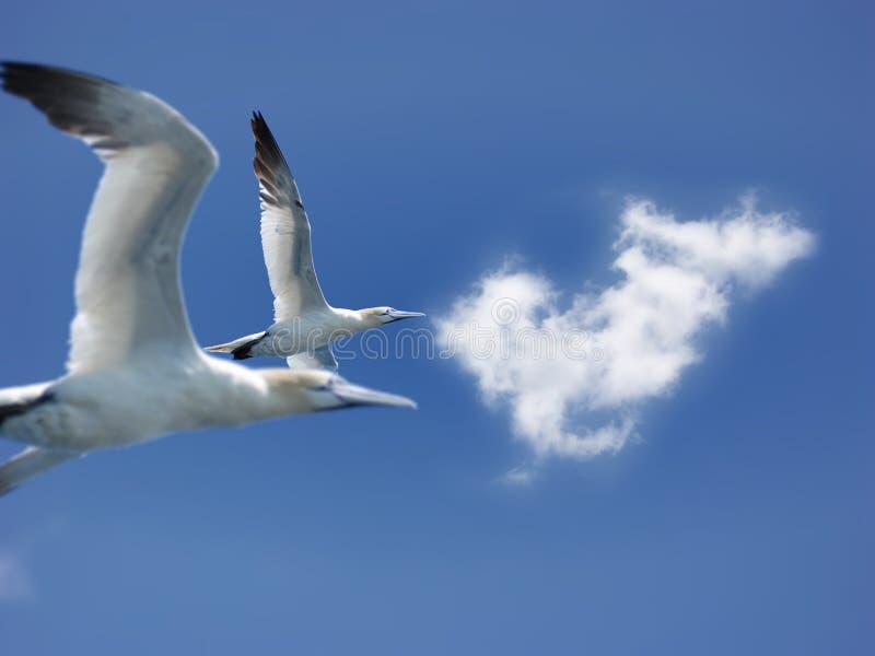 niebieski muchy gannet północnego nieba zdjęcia royalty free